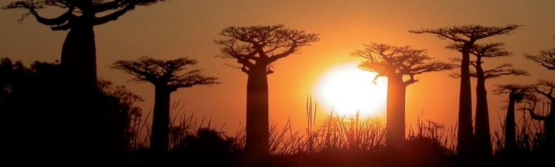 viajes-a-madagascar-baobabs