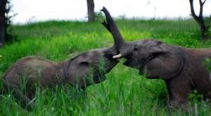 viajes-ruanda-elefantes