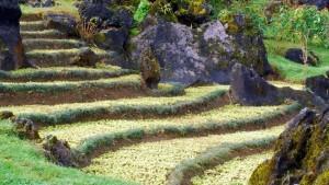 arrozales-en-vietnam-300x169