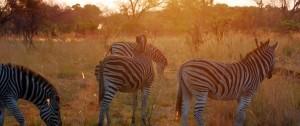 Fotografía realizada al atardecer en una de las reservas de África.