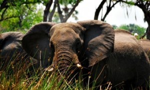 elefante--viajes-a-botswana