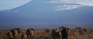 elefantes-junto-al-monte-kilimanjaro-en-tanzania1