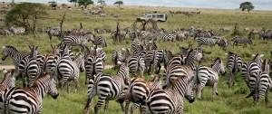 fotografia-de-la-migracion-de-nus-en-un-viaje-a-tanzania