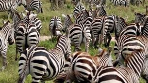 fotografia-de-la-migracion-de-nus-en-un-viaje-a-tanzania2