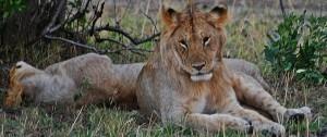 Fotografia realizada en uno de los safaris a píe que se realizan en Botswana.