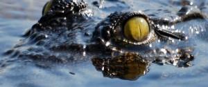 Impreionante fotografía del ojo de un cocodrilo nadando por uno de los canales del Delta del Okavango en Botswana.