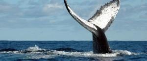 viajes-a-madagascar-ballenas-en-sainte-marie-o-en-ifaty