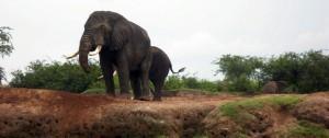 viajes-a-uganda-