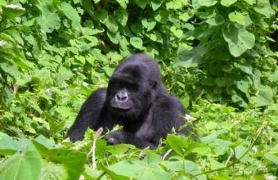 Viaje a Uganda y Ruanda Mil Colinas