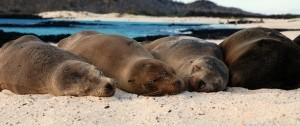 viajes-islas-galapagos-