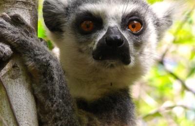 Madagascar Explorer
