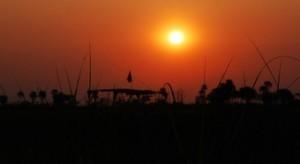 viajes-a-botswana