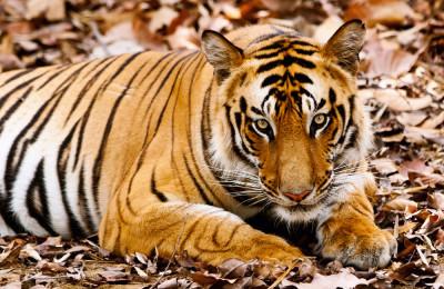 Parques Nacionales de India