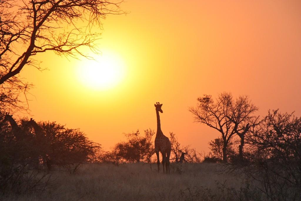 lunas de miel en África