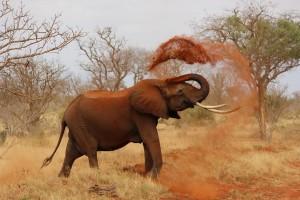vida salvaje de Kenia
