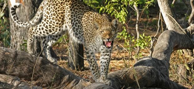 Especies animales autóctonas de Botswana