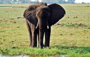 paseo-en-elefante-en-zambia-300x193