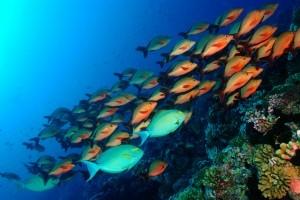 visitar-tahiti-y-conocer-su-flora-y-fauna