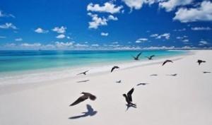 playa-de-bird-island-en-seychelles-300x177