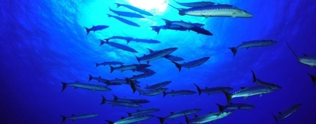 Peces en el mar de Mozambique