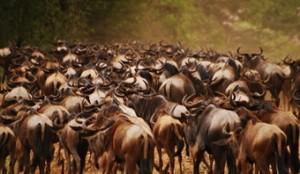 viajes-a-kenia-y-tanzania-migracion-de-nus-300x174
