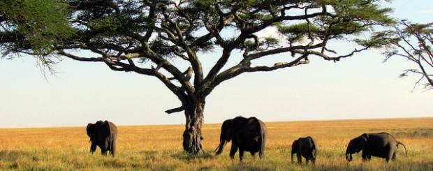 Vista de elefantes en un viaje de novios