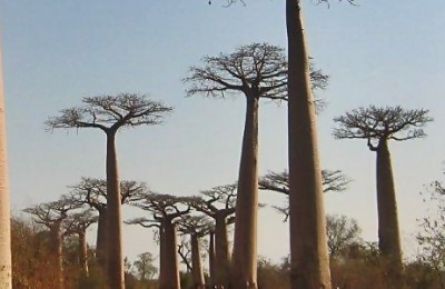 Expedición Baobab Madagascar