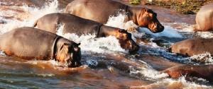 Fauna de lago Kariba en Changa Camp Zimbabwe