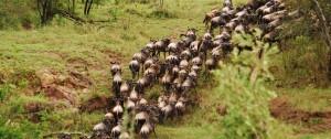 migracion-de-nus-en-kenia-tanzania-viajes-a-africa