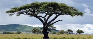 Típico paisaje africano.