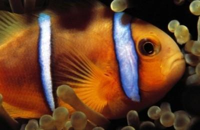 Polinesia Auténtica