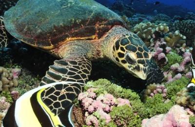 Especial Viaje de Novios, Tahiti, Moorea y Bora Bora