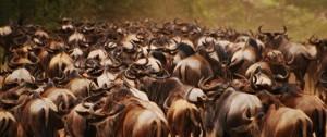 viajes-a-kenia-y-tanzania-migracion-de-nus