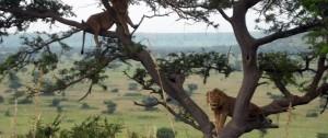 viajes-a-uganda-1