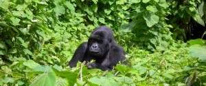 viajes-a-uganda-2