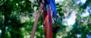 viajes-guatemala-