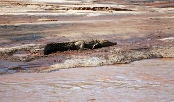 cocodrilo--viajes-a-etiopia
