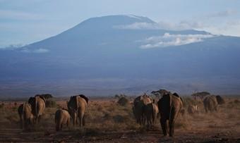 elefantes-junto-al-monte-kilimanjaro-en-tanzania