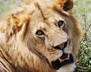 leon--viajes-a-africa