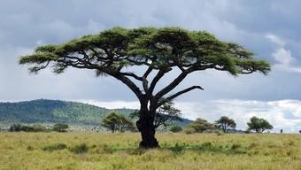 paisaje--viajes-a-africa