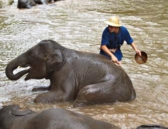 viaje-a-tailandia-elefantes-del-norte-de-tailandia