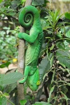 viajes-a-madagascar-camaleonreservapeyrieras