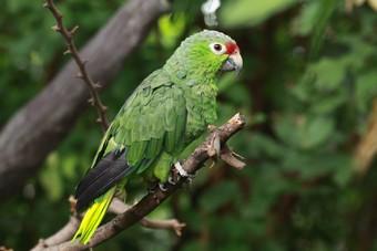 viajes-islas-galapagos-amazonia-ecuatoriana