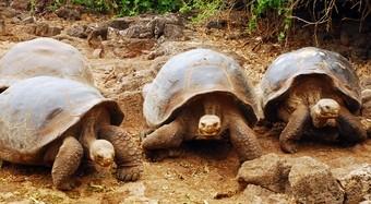 viajes-islas-galapagos