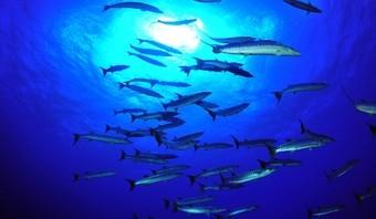 viajes-mozambique--fondo-marino