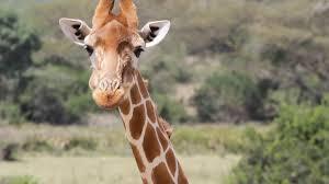 Safari fotografico africa