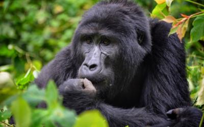 Parques Nacionales de uganda