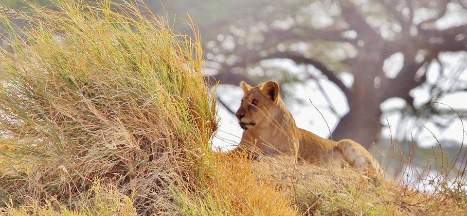 viaje de novios personalizado tanzania