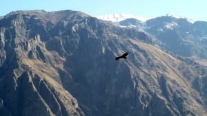 valle del colca perú