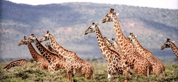 precio del safari en Tanzania